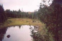 2004-  La femelle et le veau que Jean a vu le lundi matin