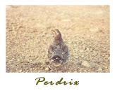 Cliquez ici pour visionner mon album de chasse à la perdrix