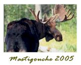 Cliquez ici pour visionner l'album des trophées Réserve Mastigouche 2005